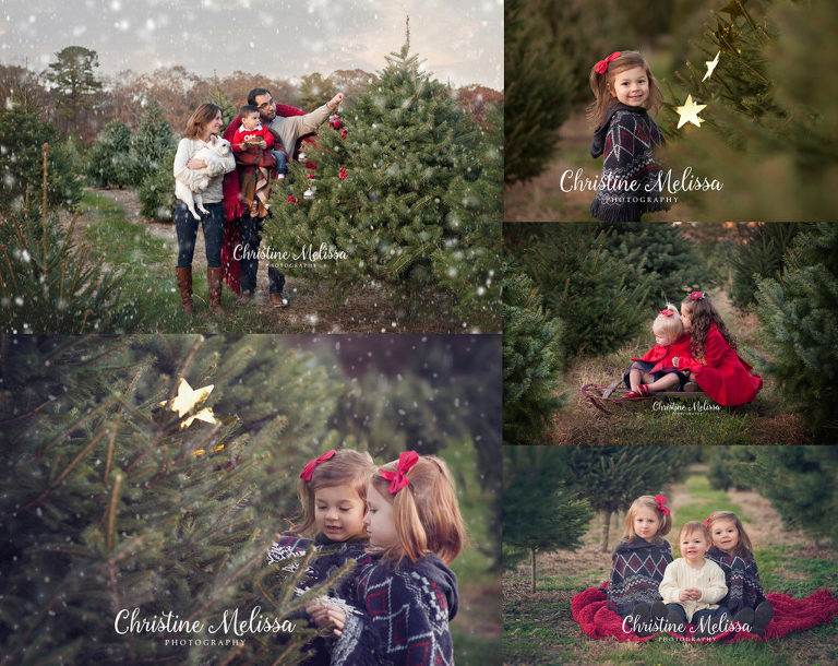 a6eba9d805 families and children in long island christmas tree farm for holiday card  photos